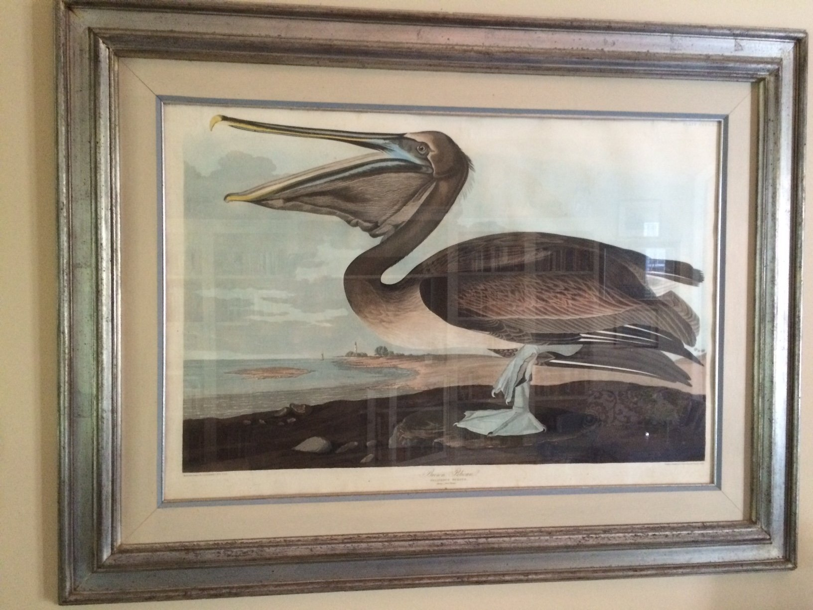audubon havell 1836 brown pelican double elephant.jpg