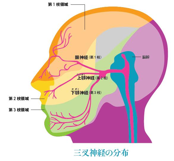 //f01.justanswer.com/ref/http_lohasmedical.jp/archives/images/39-1.6.JPG