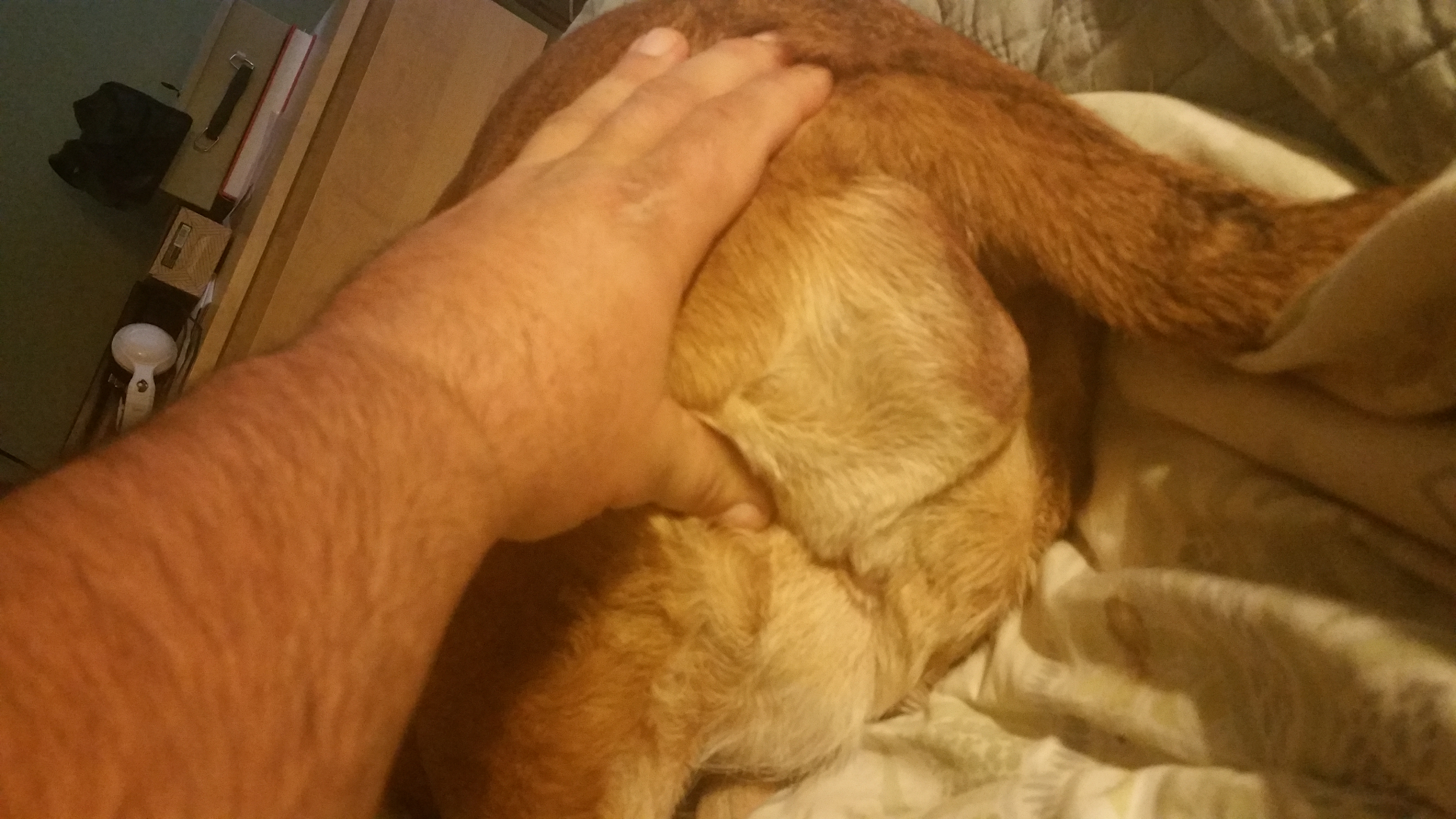 lump on dogs rear end