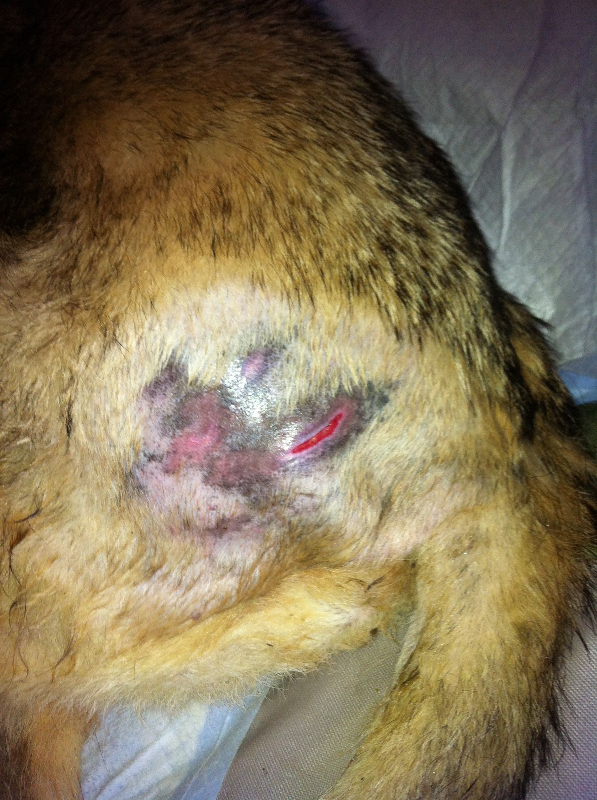 What Can Help Sores On Dog