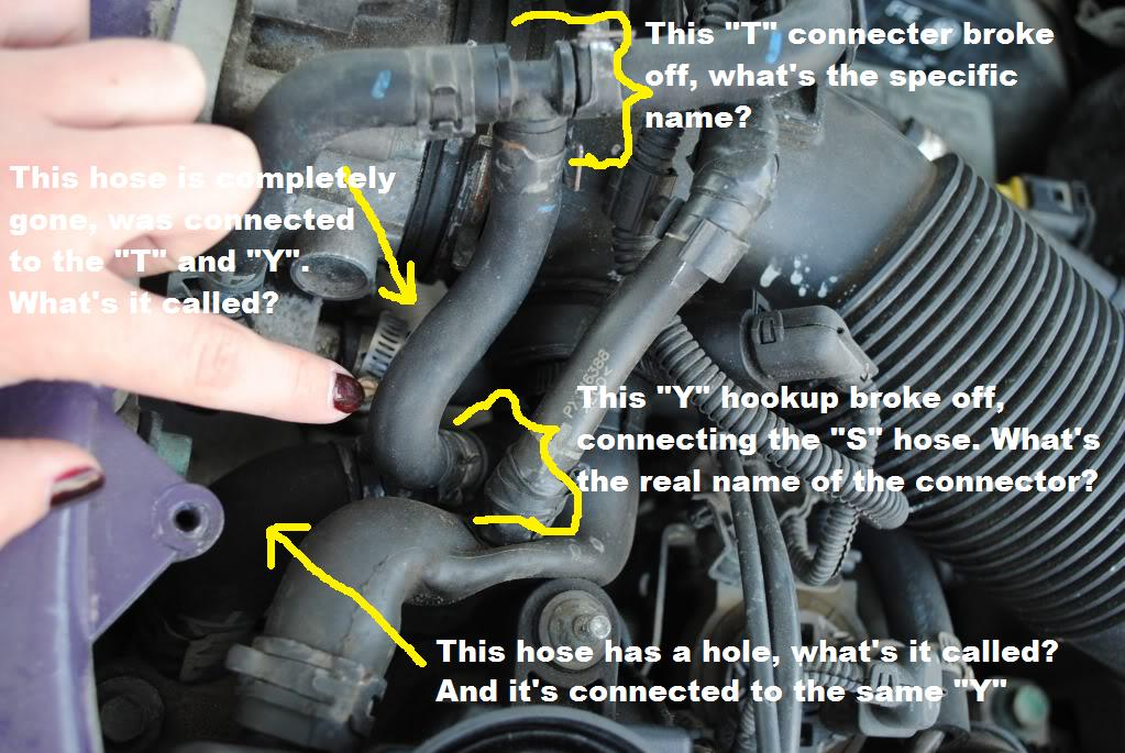 How Do I Fix The Coolant Hose Thermostat On A 2001 Vw Jettarhjustanswer: 2001 Vw Beetle Thermostat Location At Elf-jo.com