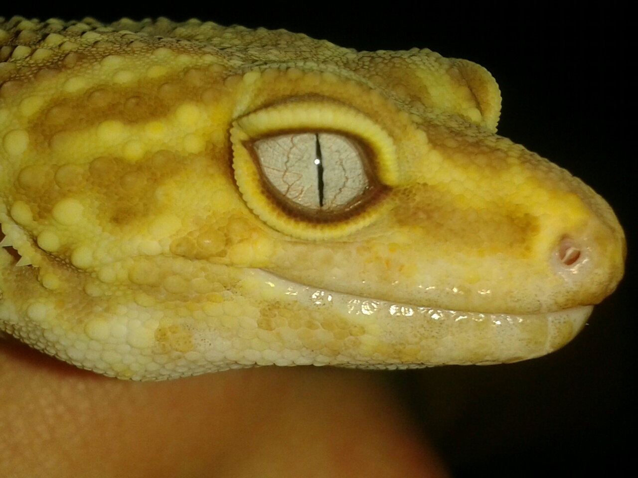 We've had our gecko about 4 years  Nothing new has changed