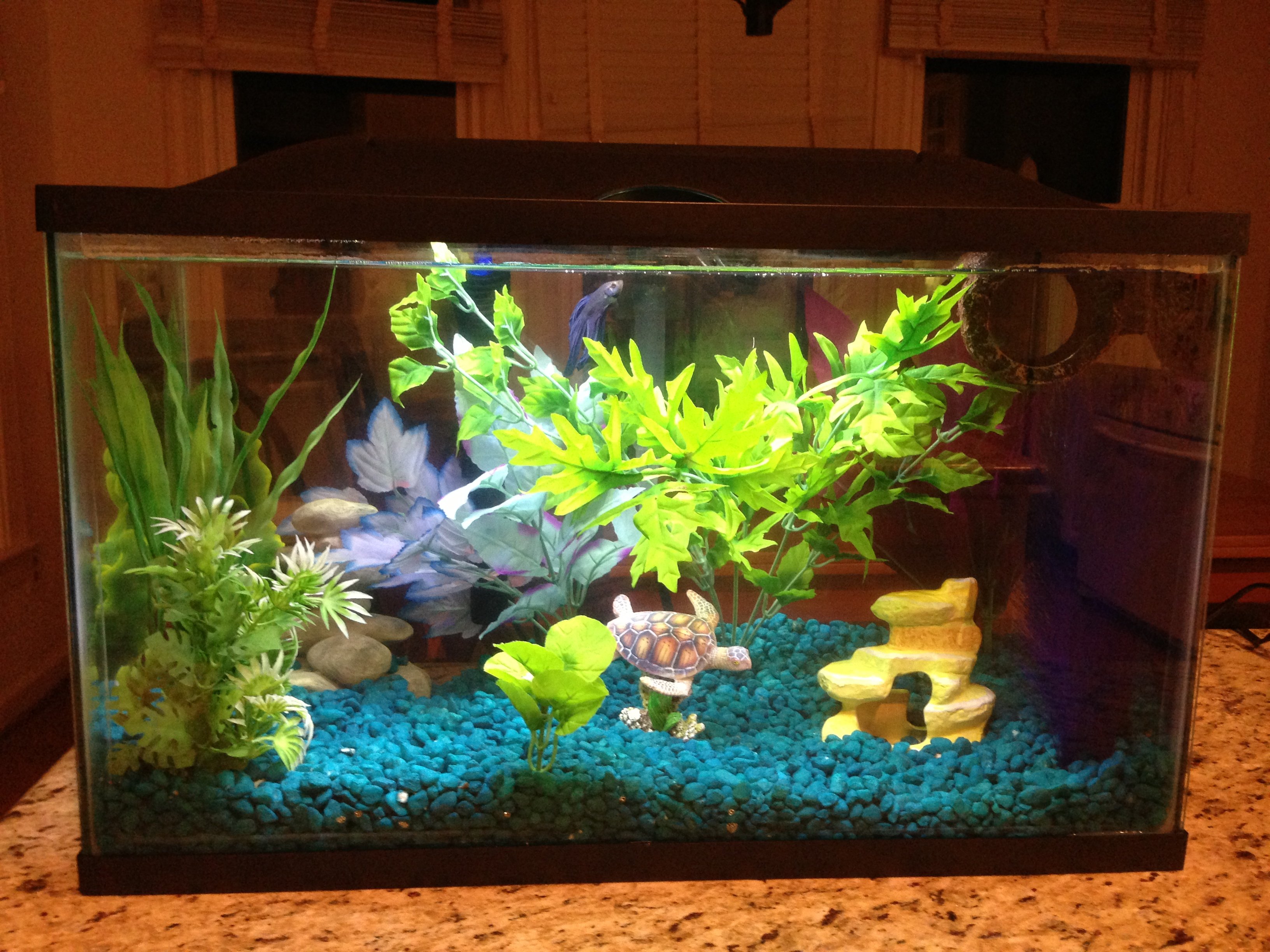 I have a new betta fish, about 3 months old. He is in a 10 ... 10 Gallon Home Aquariums