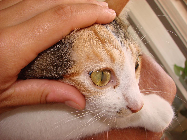 Cat Watery Cloudy Eye