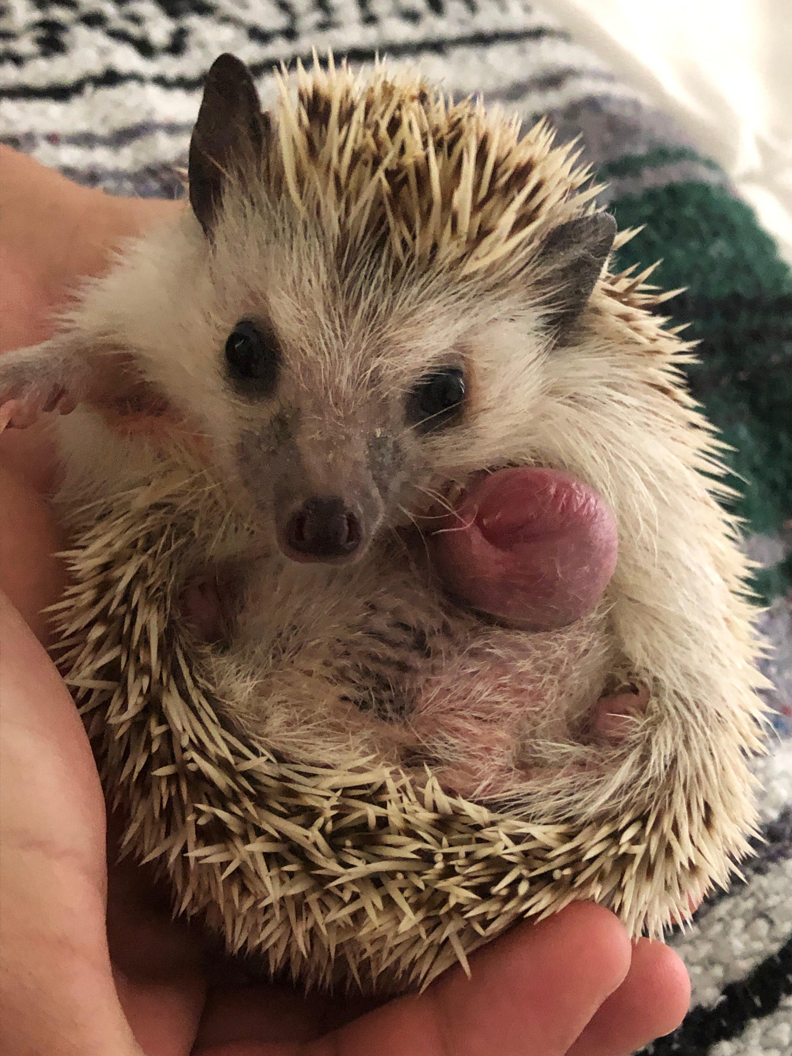 Mouth tumor hedgehog 5 Common
