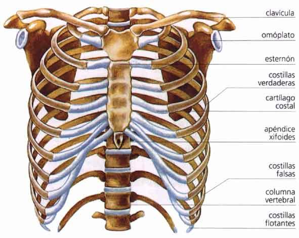 Tengo un dolor en el abdomen justo en la boca del estomago y al ...