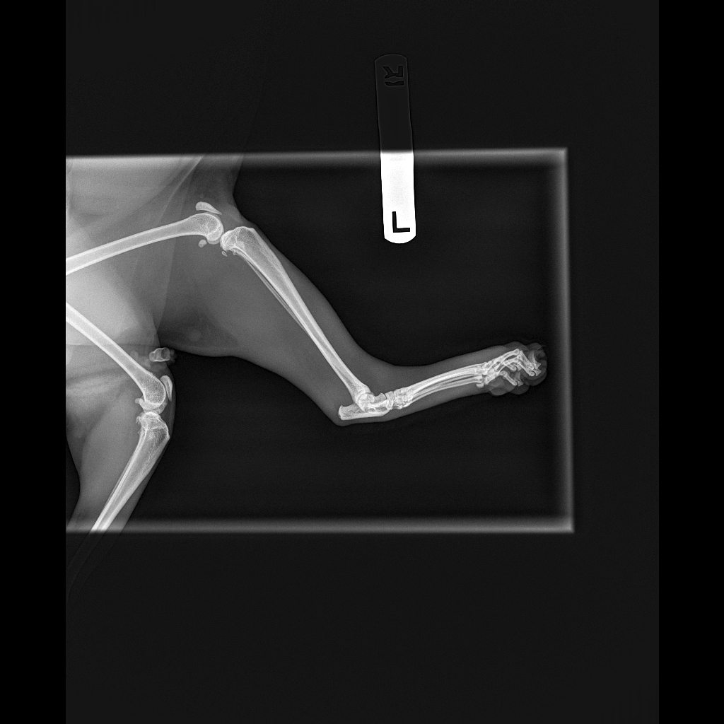 HAY_WILLIAM_7796_HIND FOOT-Foot Lateral SmA-31_07_2018-18_51_08-428.JPEG