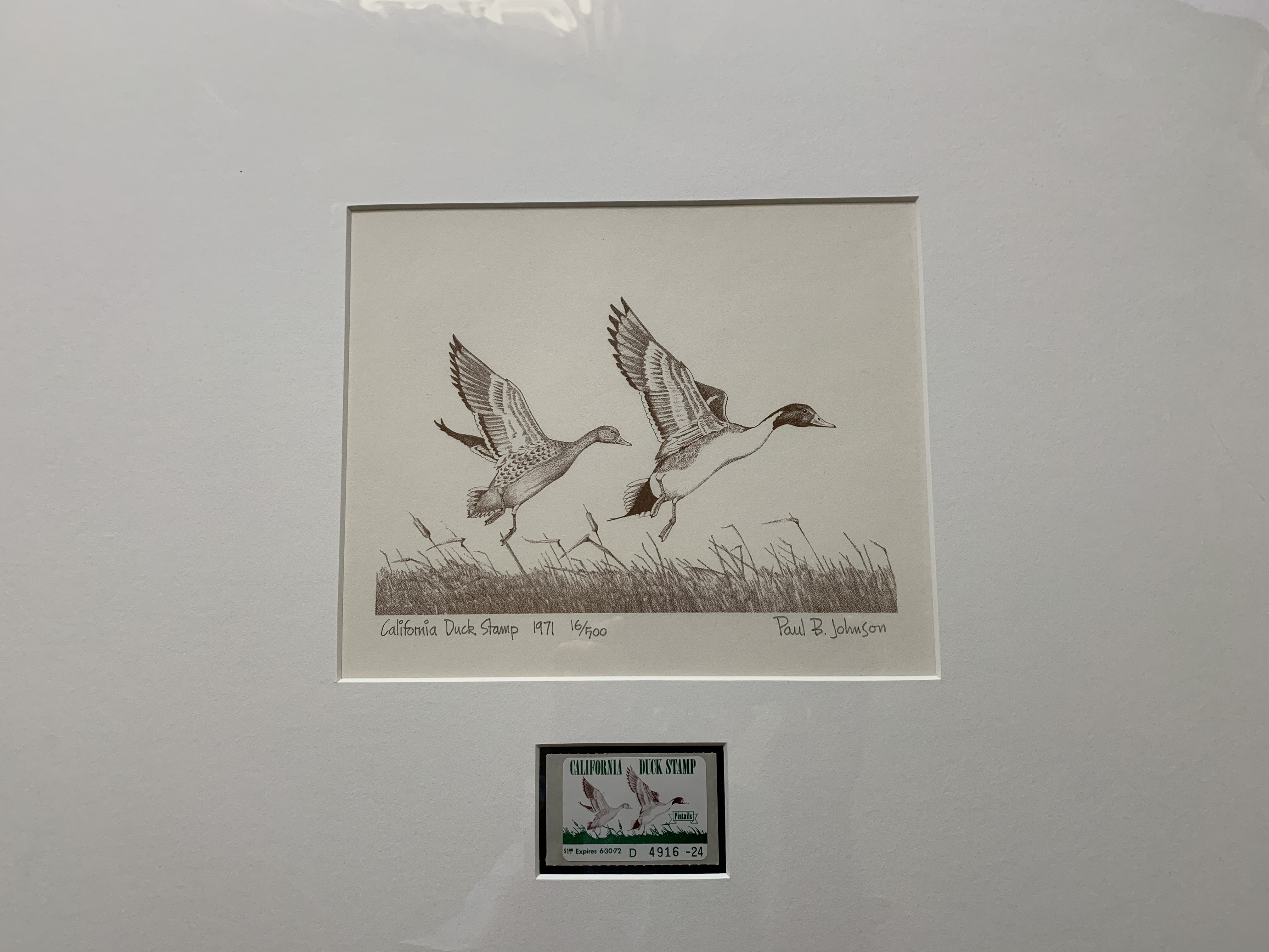 Matted Duck Print Example 1 1971 California.JPG