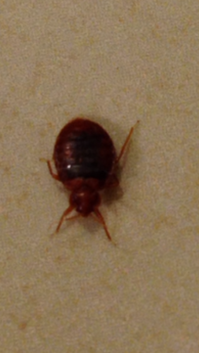 How Do I Know If I Have Bed Bugs
